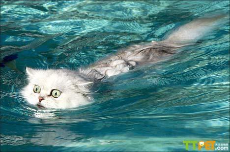 猫咪怕水是狂犬病么图片